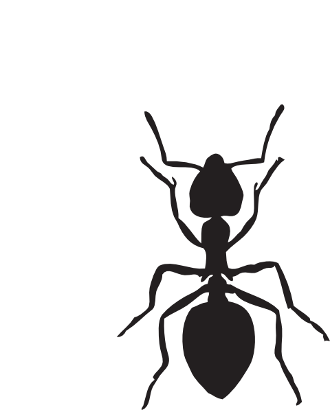 2 clipart ant.