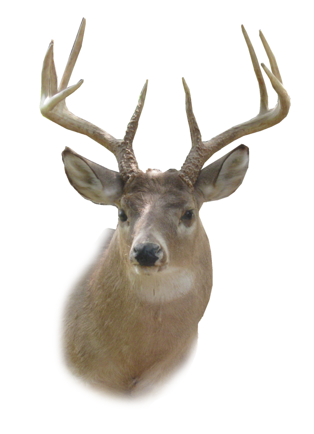 deer head clipart transparent background