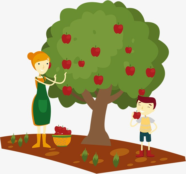 Apples clipart picking.