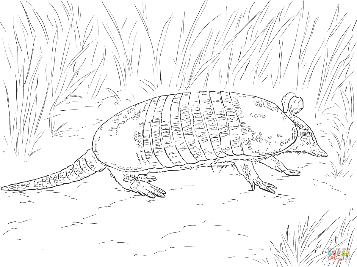 Armadillo clipart coloring page.