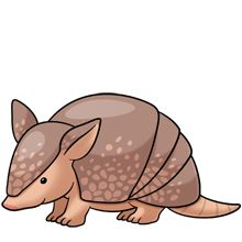 Armadillo clipart drawn.
