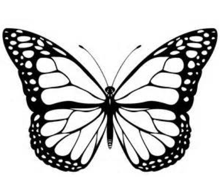 butterfly black and white clipart monarch