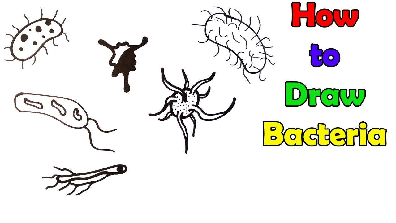 Bacteria clipart simple.