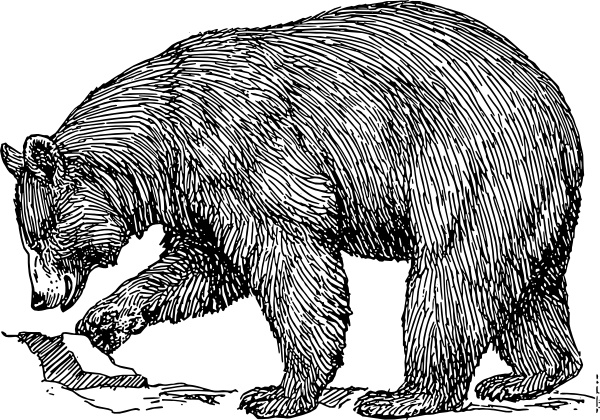 Bear clipart vector.