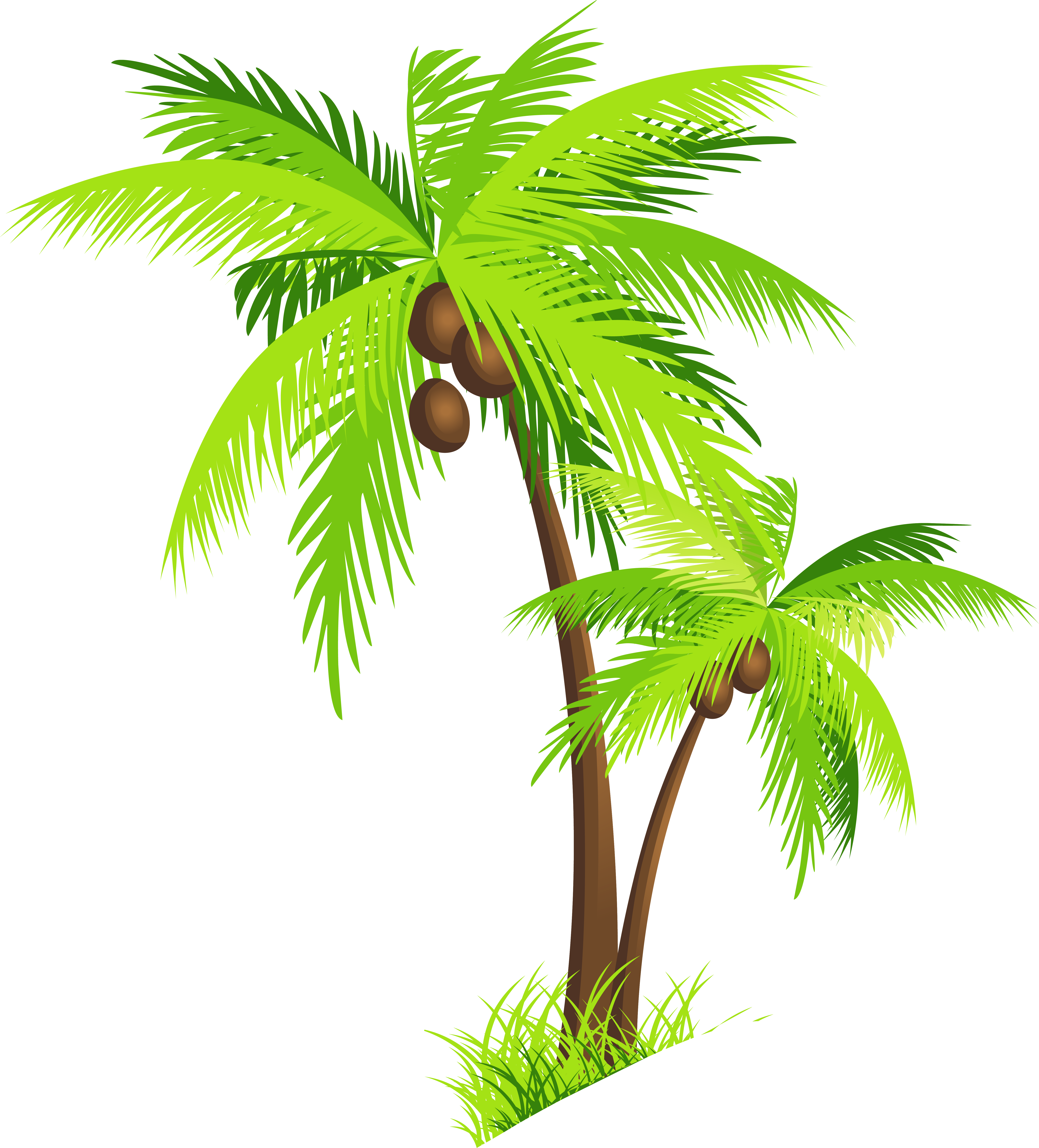 palm trees clipart coconut
