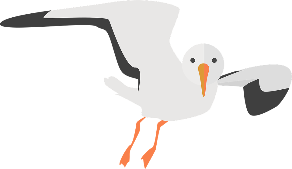 seagull clipart flying