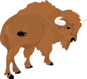 bison clipart charging