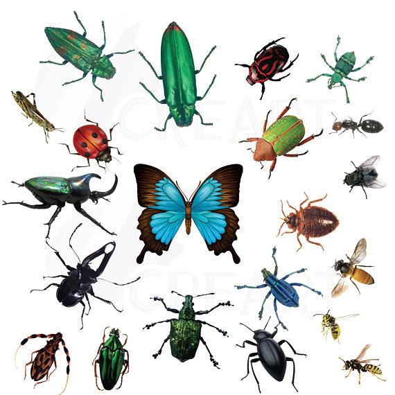 Bug clip art insect.