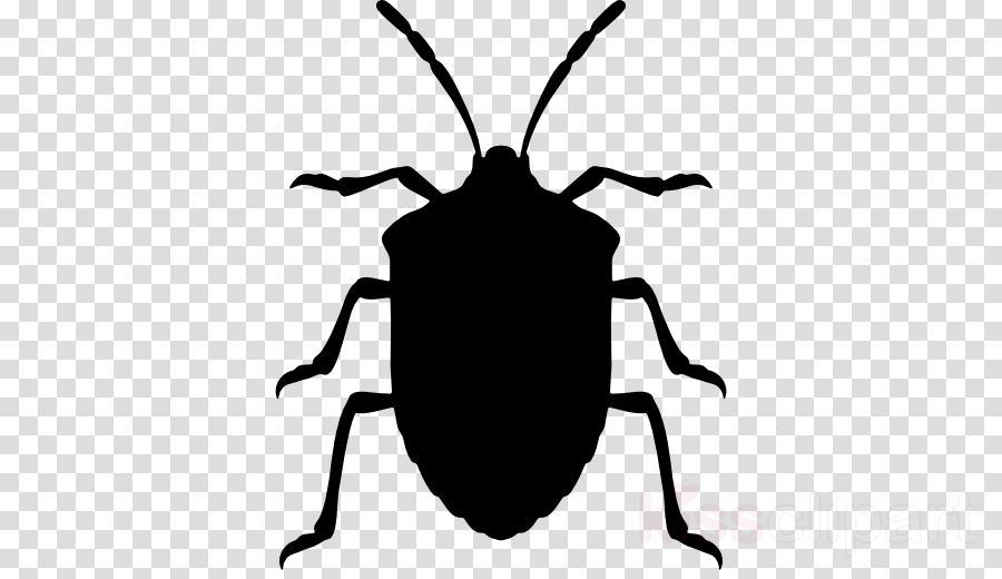 Bug clip art stink bug.