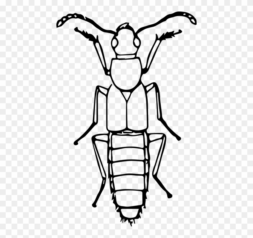 Bug clipart drawing.