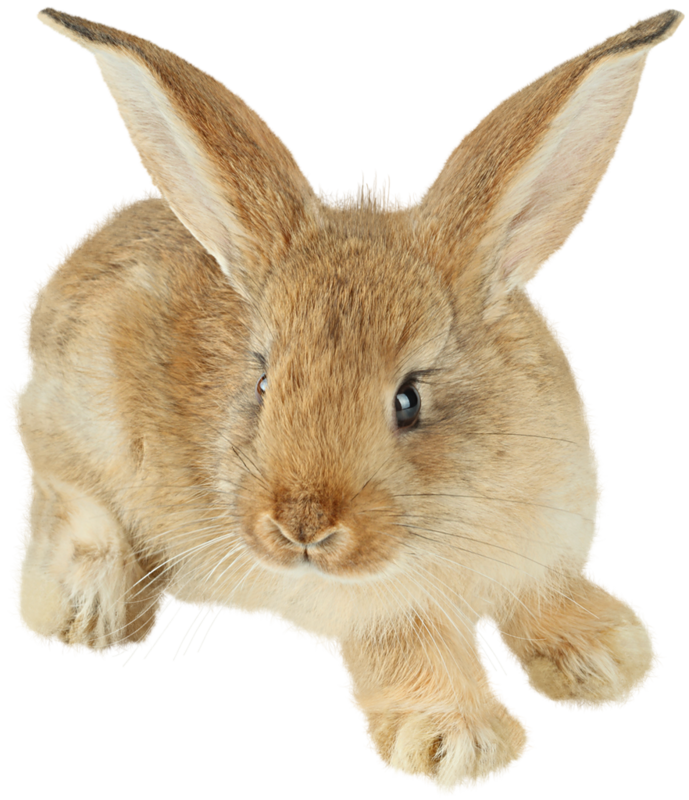 Bunnies clipart colored.