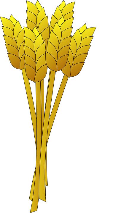 Cereal clipart wheat stalk.
