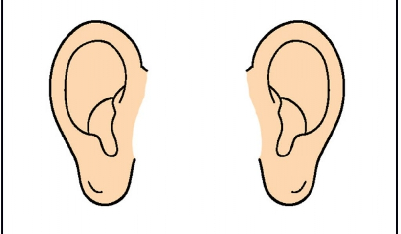 Listening ears clipart ear function.