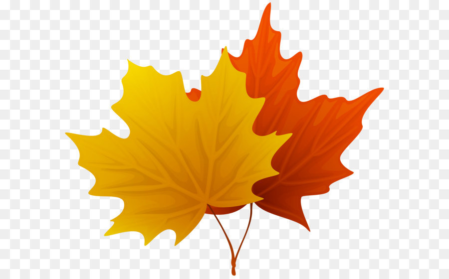 leaf clipart maple