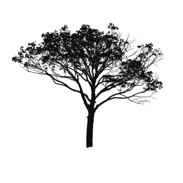 tree plan clipart silhouette vector