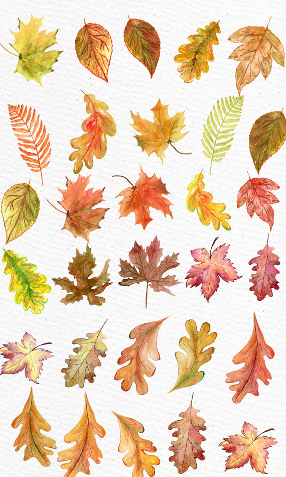 fall leaves clipart watercolor