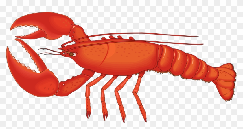 Crawfish clipart lobster.