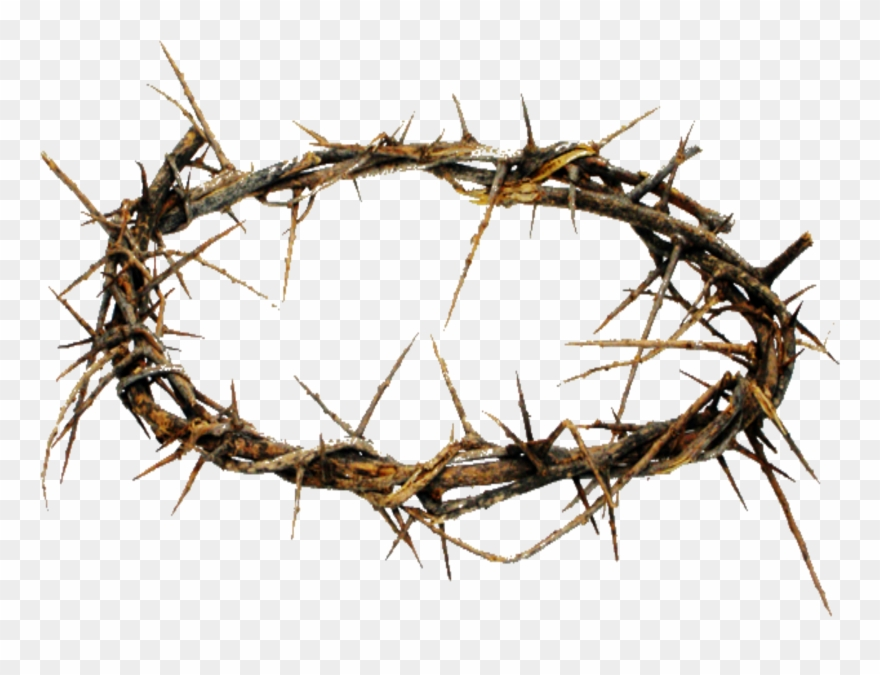 crown of thorns clipart transparent background