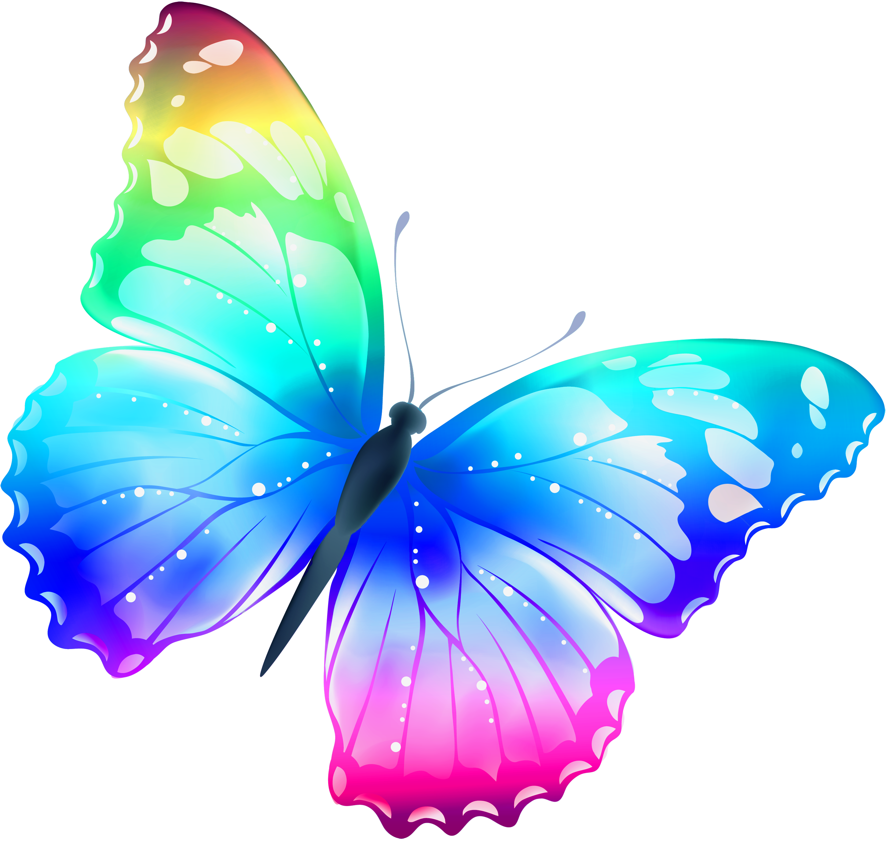 Colors clipart butterfly.