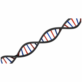 Dna clipart phosphate.