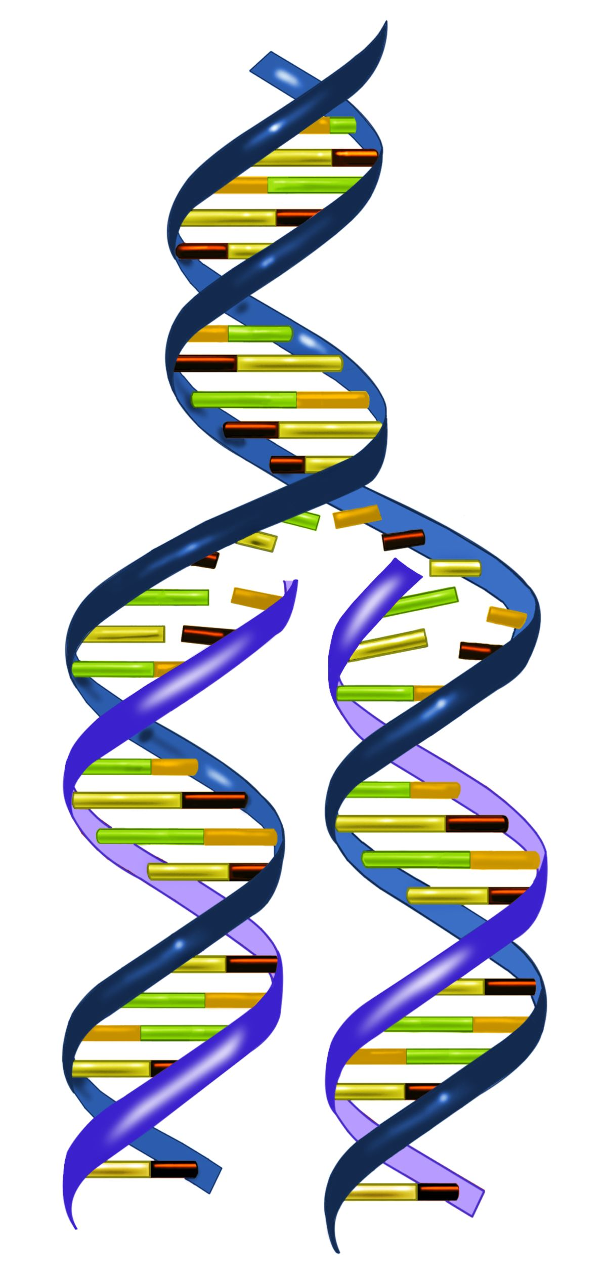 Dna clipart physical science.