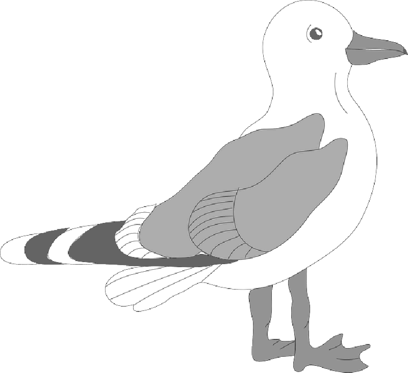seagull clipart transparent background