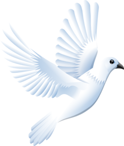 Dove clipart vector png.