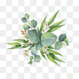 Eucalyptus clipart transparent background leaves.