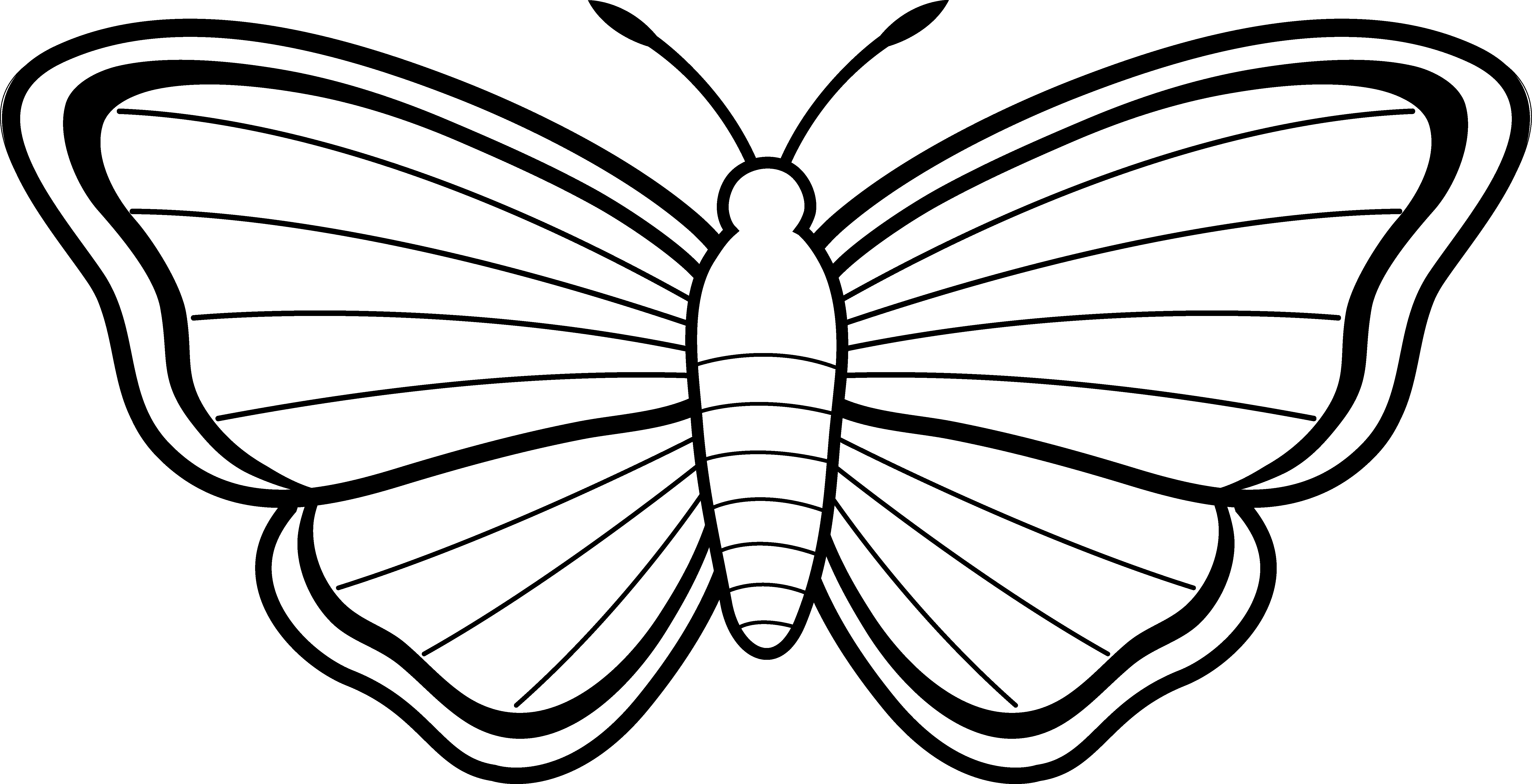 butterfly black and white clipart simple