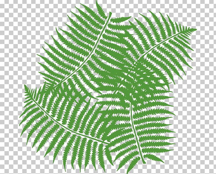 Fern clipart drawing.
