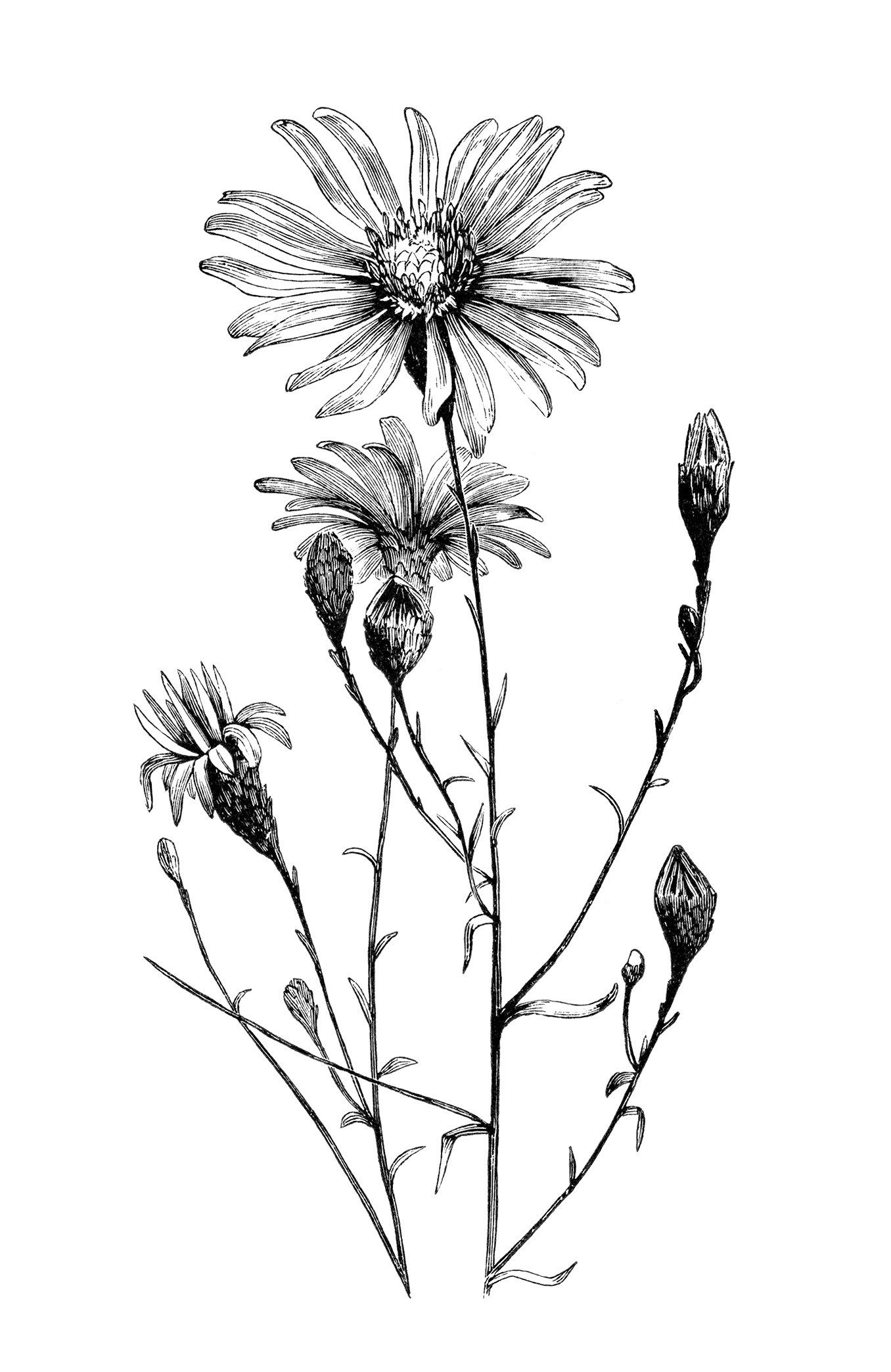 Comprised clipart flowers.