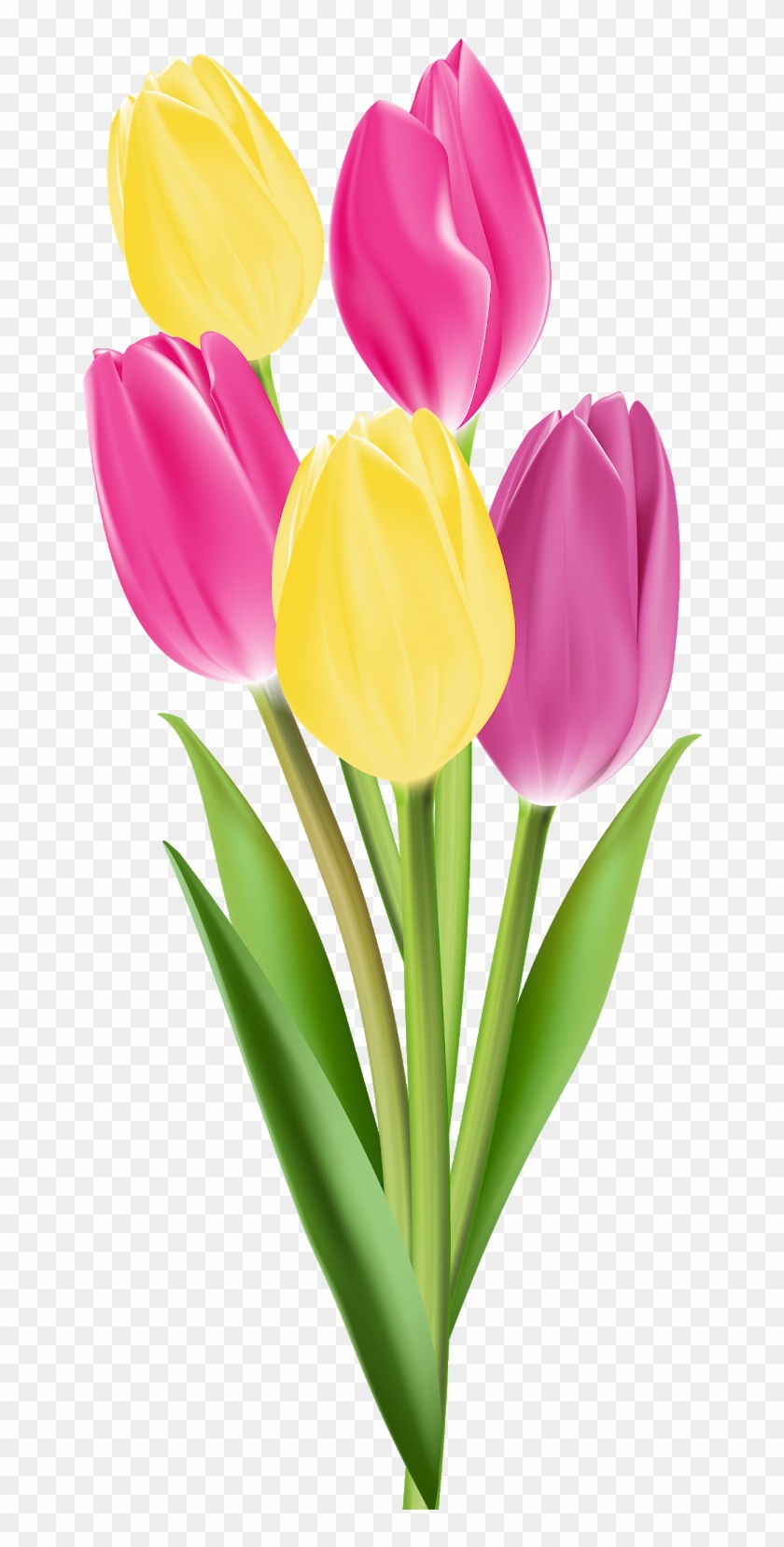 flower bouquet clipart tulip