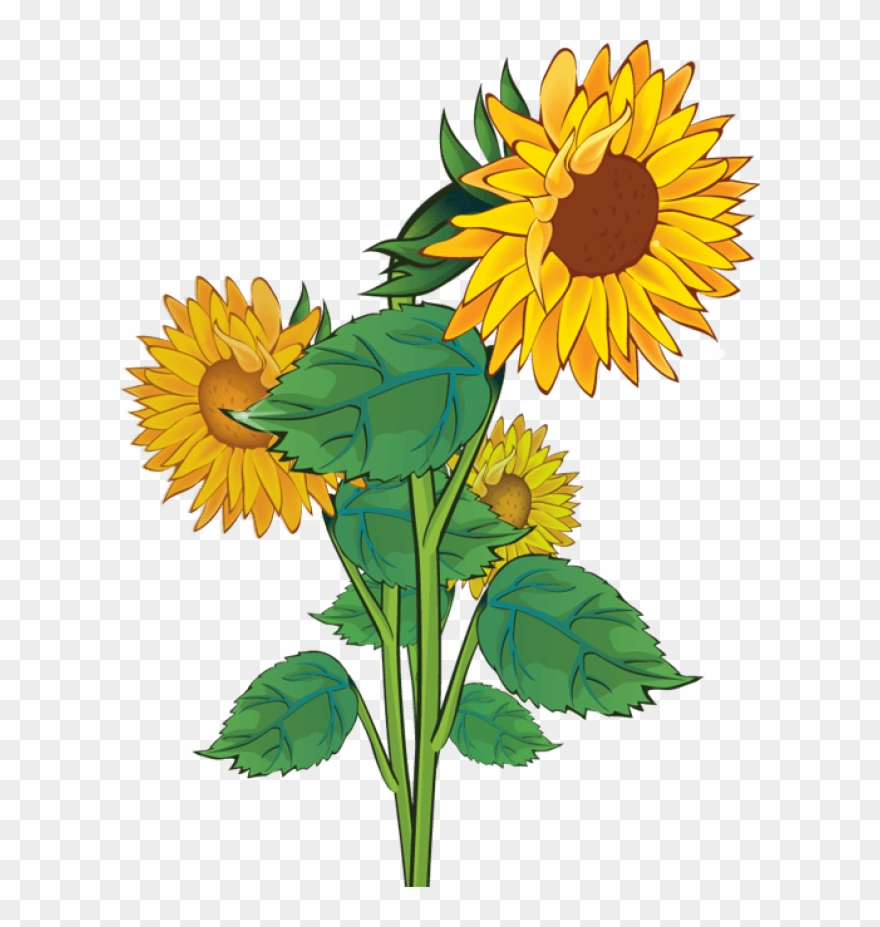 public domain clipart flower