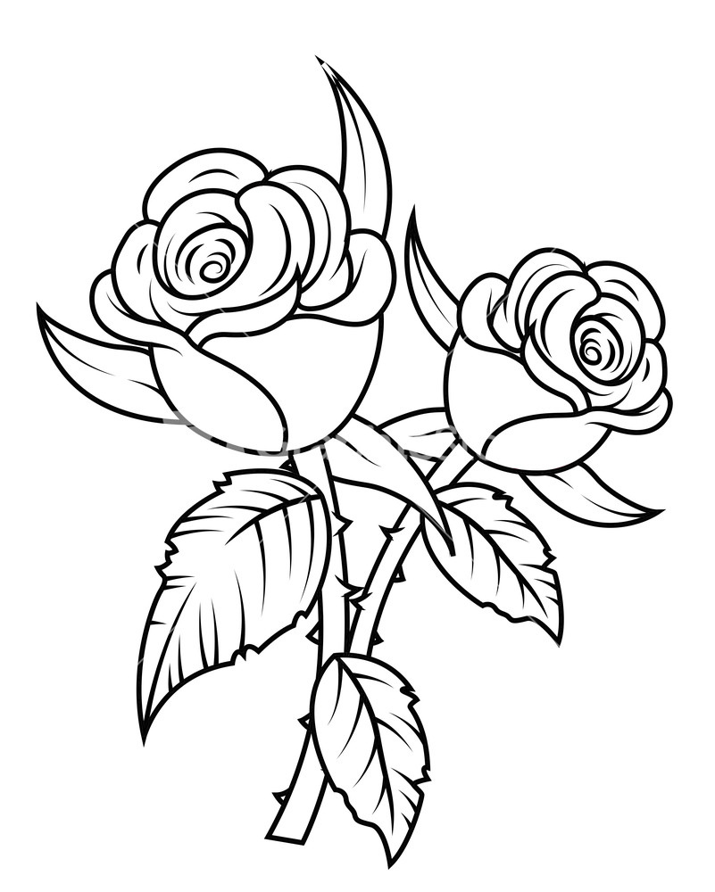 rose clipart black and white bouquet