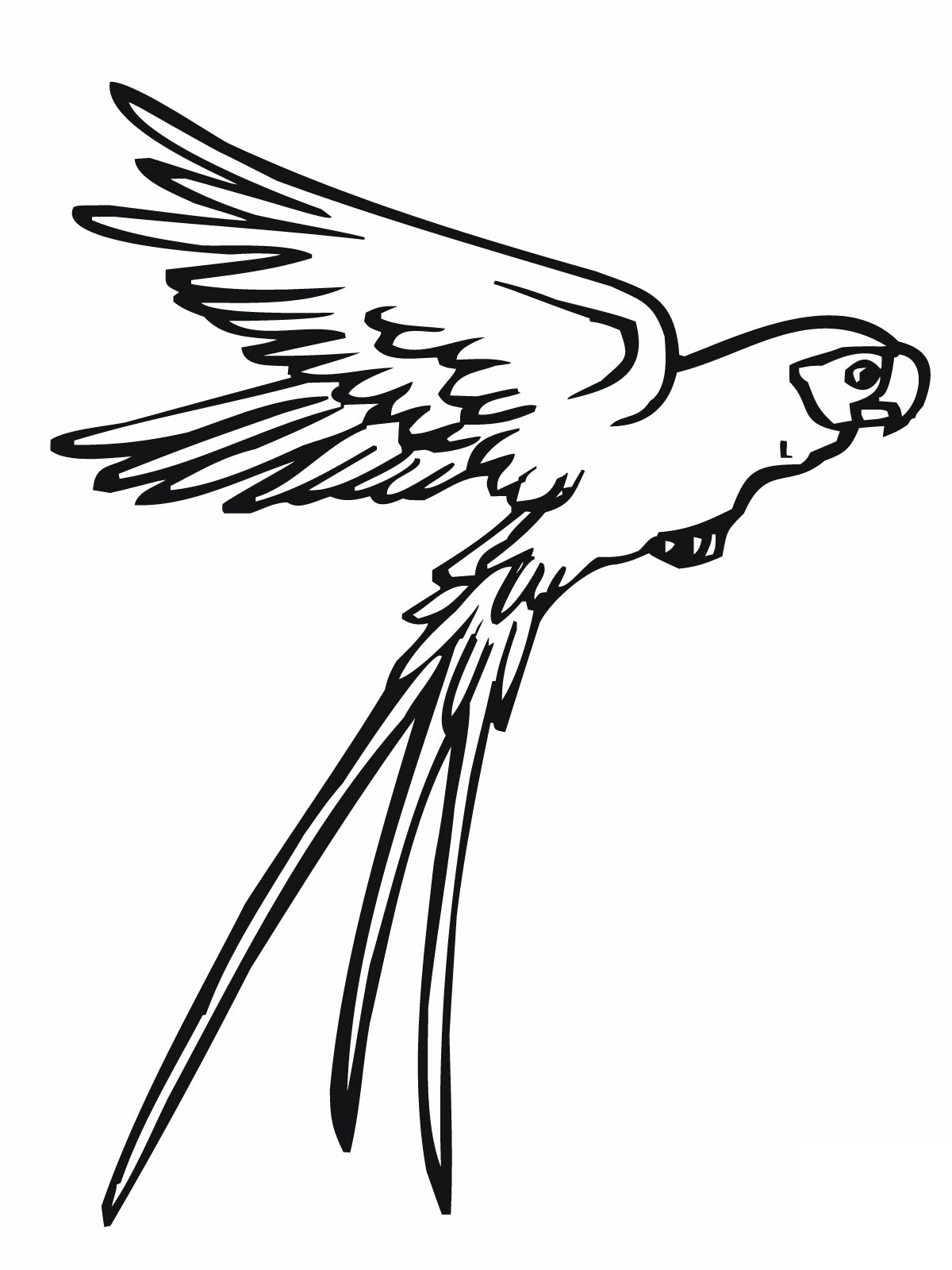 Fly clipart coloring pages.