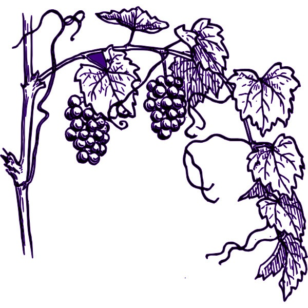 Grapes clipart cliparts download.