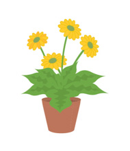 Plant clipart animated.