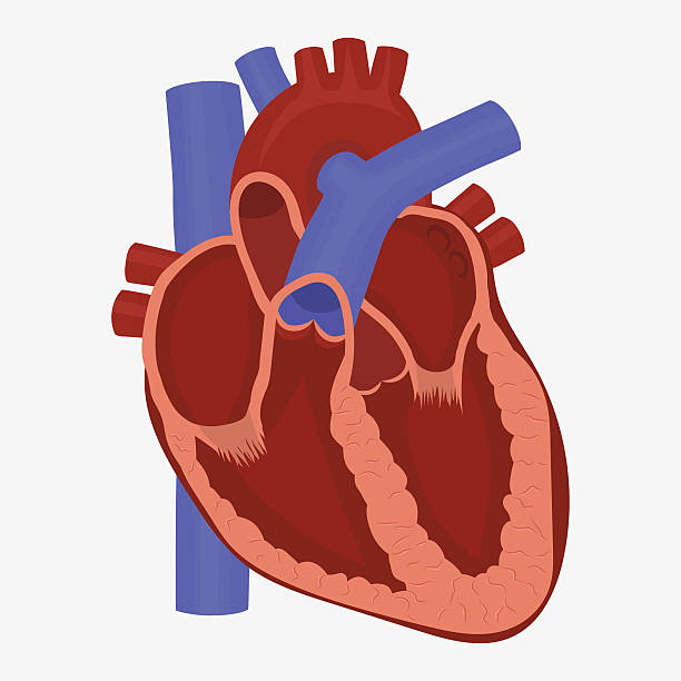 Hearts clipart biology.