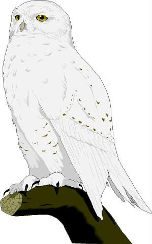owl clipart realistic