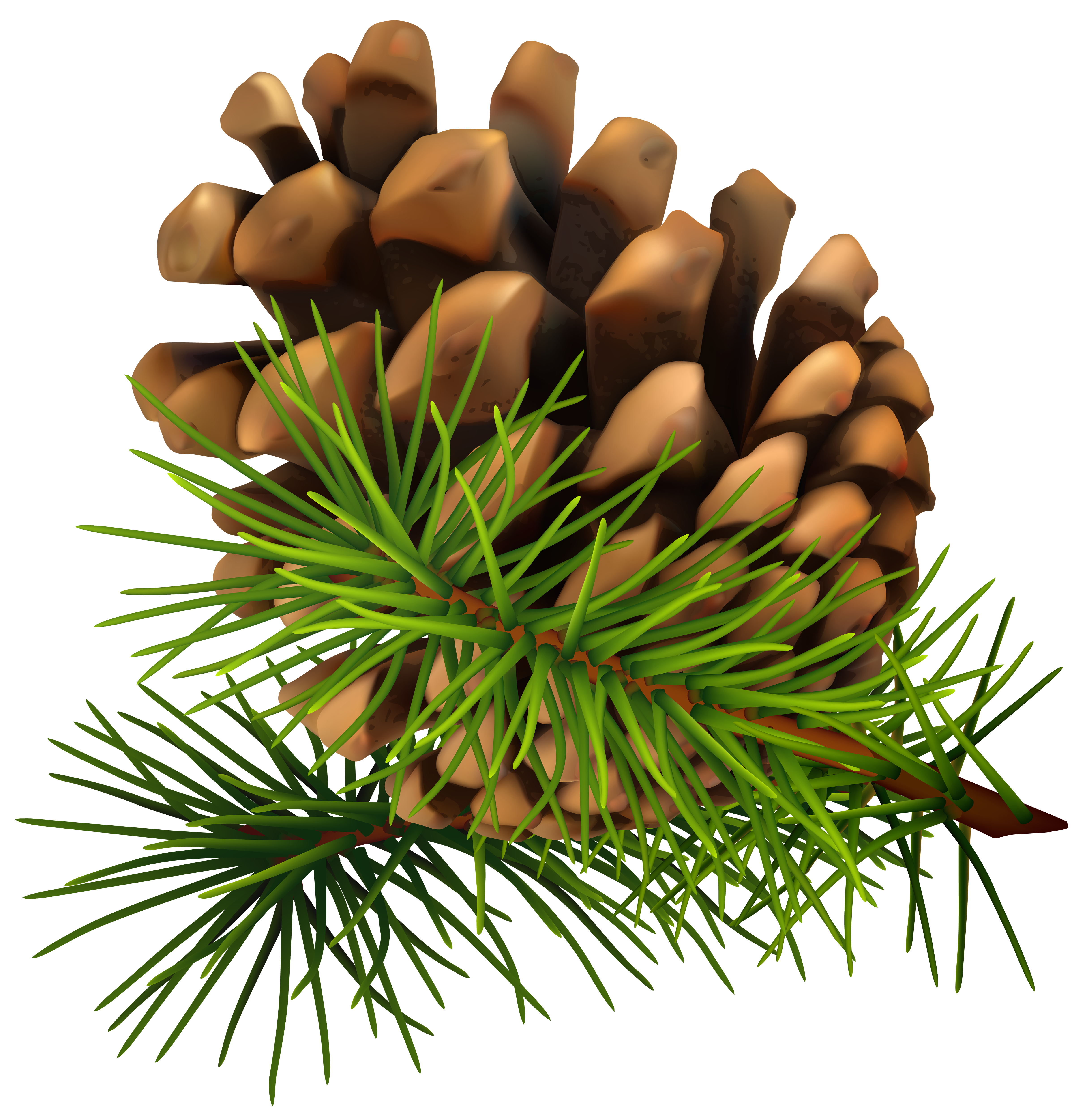 pinecone clipart fall