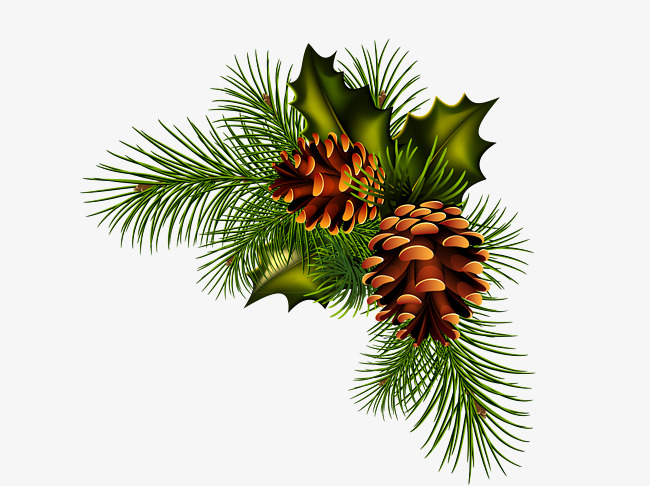 pinecone clipart spruce