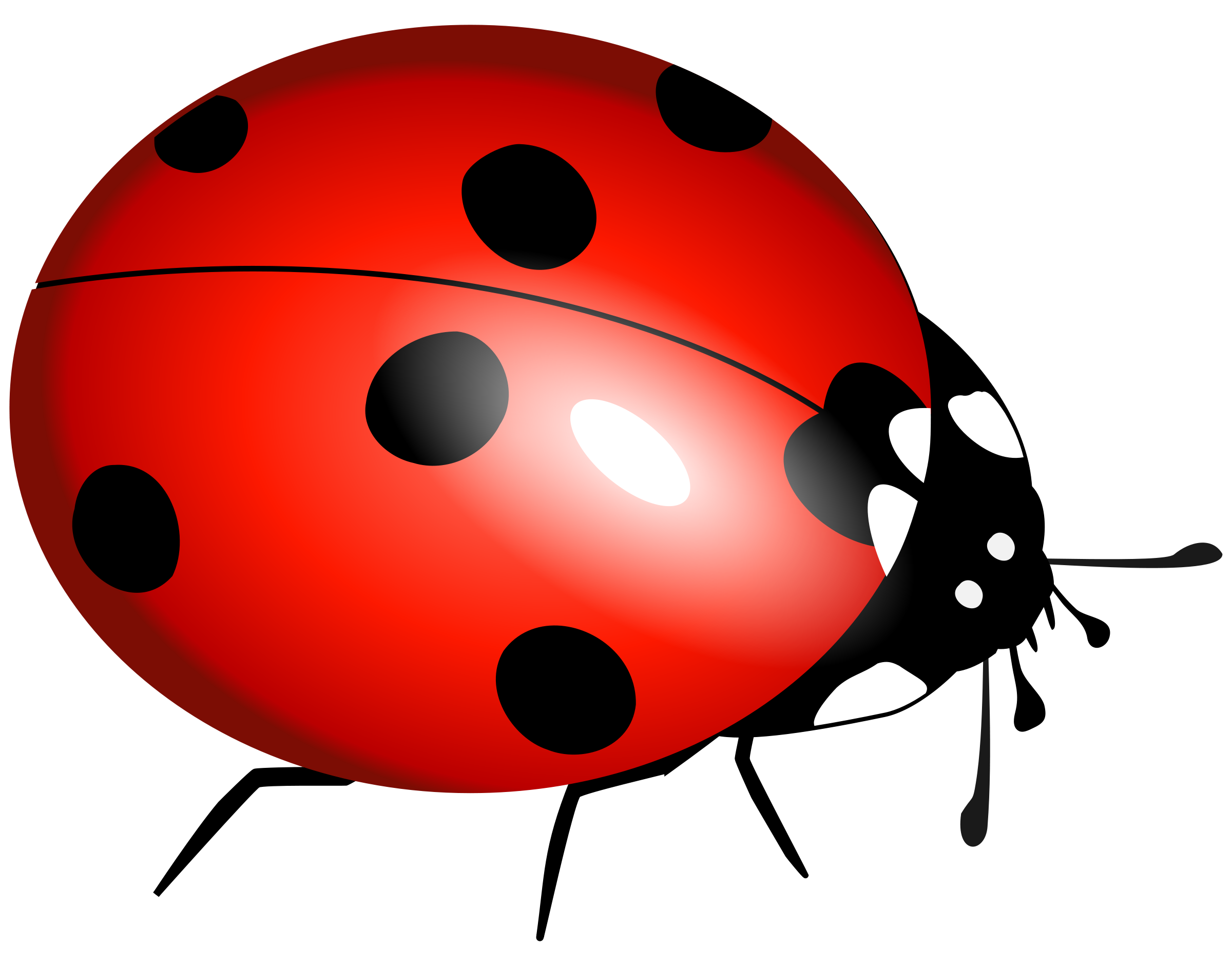 lady bug clipart flying