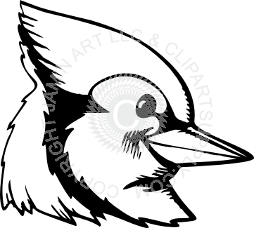 jay clipart black and white
