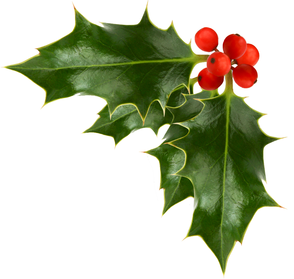 holly clipart transparent background