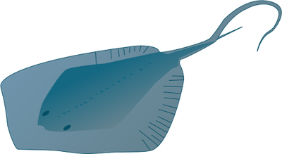 Nemo clipart stingray.