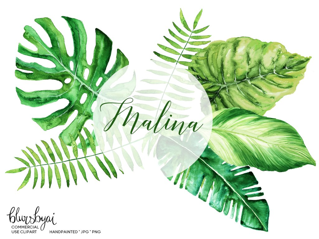 Palm clipart watercolor.