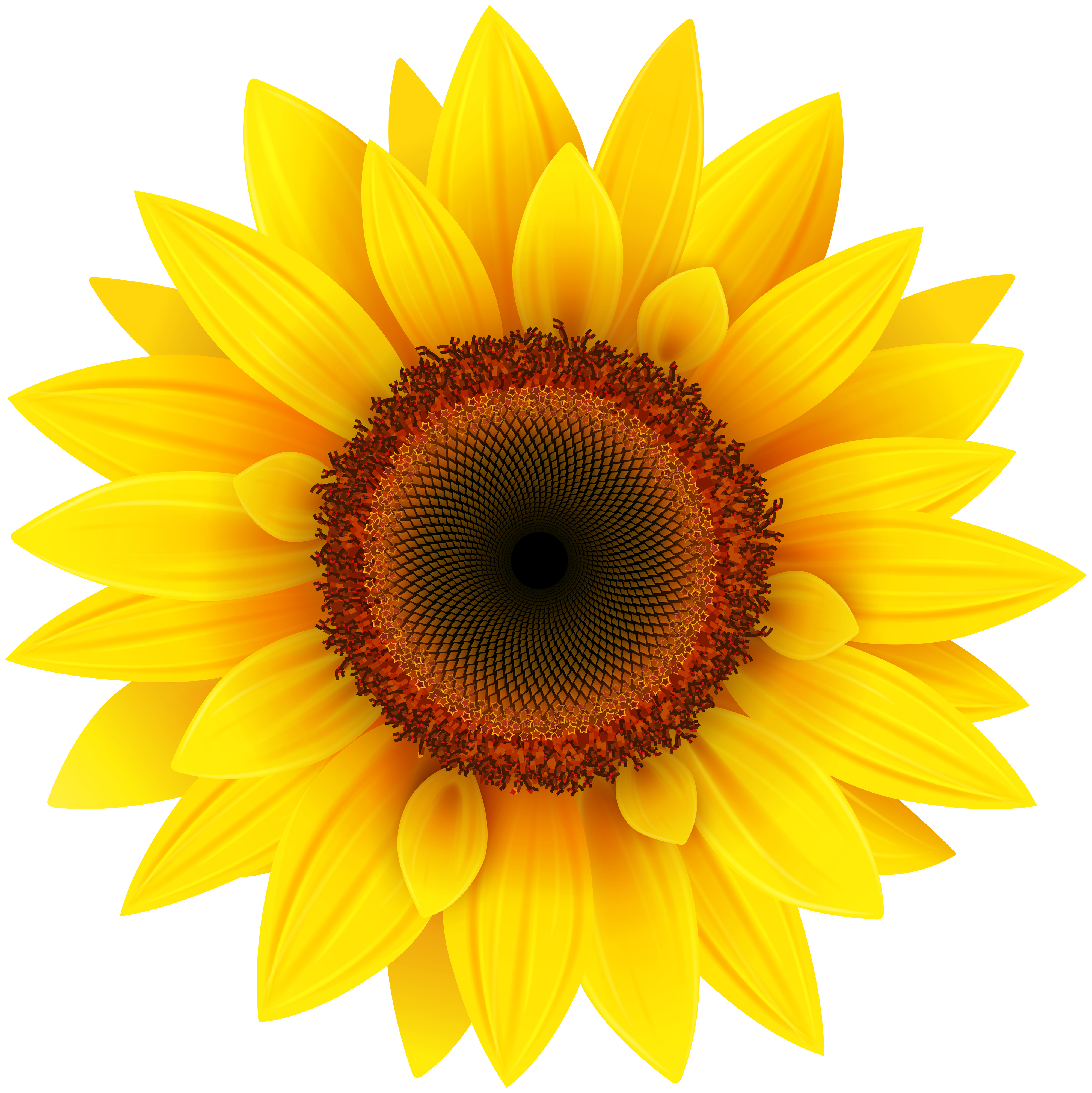 sunflower clipart clear background