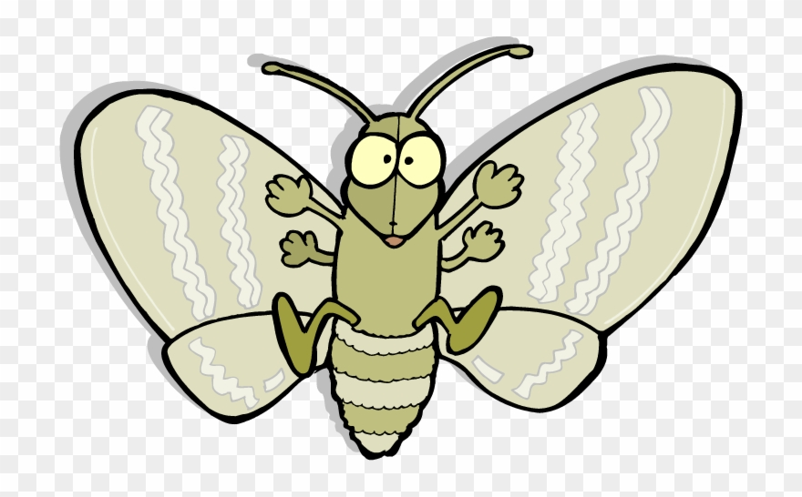 moth clipart animated