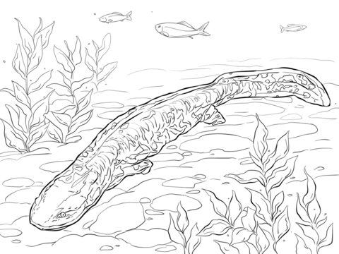 Mudpuppy clipart coloring page.