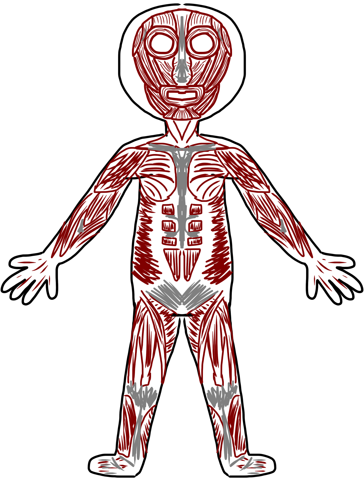 Muscle clipart body tissue.